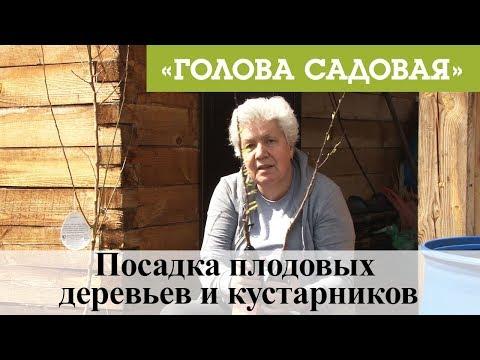 Вопрос: Какие плодовые деревья и кустарники можно посадить на участке в Крыму?