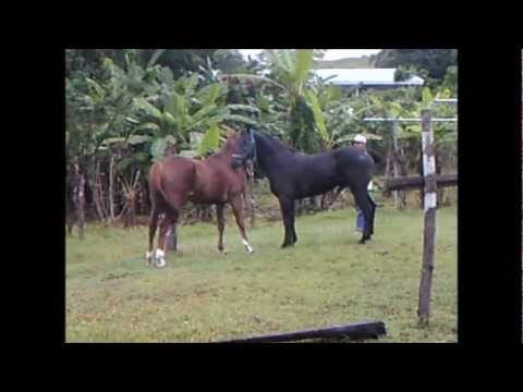 horse meeting going dangerous