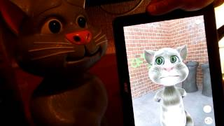 Коты Том из планшета знакомится с Томом из Китая