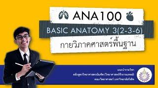 รายวิชาในหลักสูตร BMS ตอนที่ 1: ANA100 Basic Anatomy 3(2-3-6)