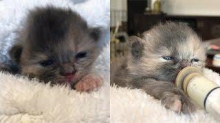 Rescue 3 Super Cute Little Kitten From The Street
