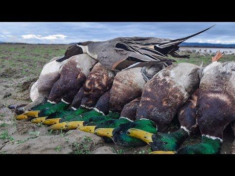 Western Washington Duck Hunting