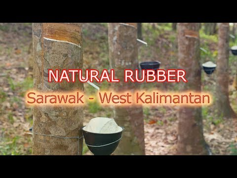 Natural Rubber Industry