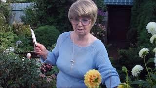 Георгины. Хранение, проращивание клубней. Наталья Иванова отвечает на вопросы.