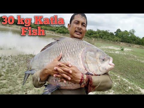 30 kg Amazing Fish/Bhakur Fish/Catching big Fish in the River/Fishing Man