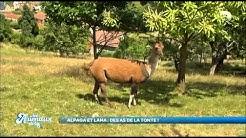Les animaux de la 8 - Escapade animalière en Meurthe et Moselle