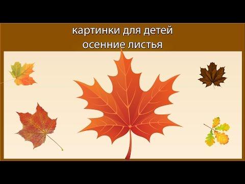 Как изменилась окраска листьев осенью