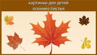 Картинки для детей осенние листья 1