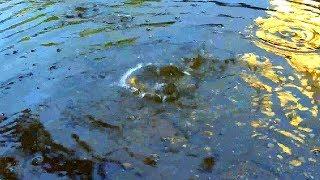 Капли Воды Падают в Воду. Звук Капли Воды Падают в Воду. Футаж Капли Воды. Футажи для видеомонтажа