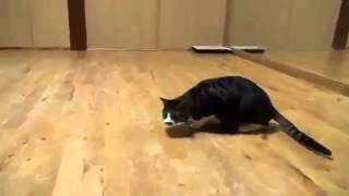 Кошки нападают