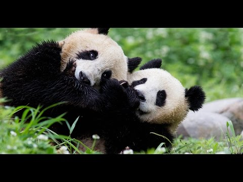 Webinar | Discover China's Wild Side