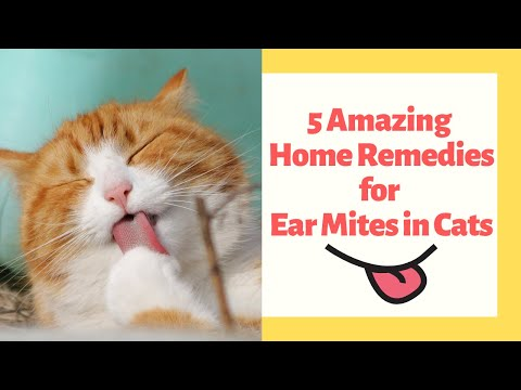 5 Home Remedies for Ear Mites in Cats | Pet Side