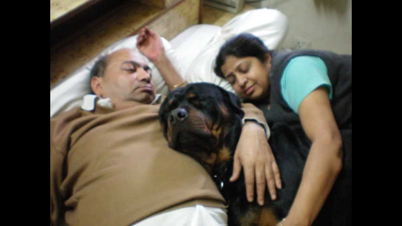 why rottweilers make good pets Do labrotties make good pets what makes a pet good depends on the person, and also the individual pet one of the drawbacks of mixed breeds is that it's a bit of a lottery.