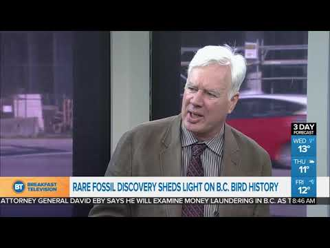 rare-fossils-shed-light-on-b.c.-bird-history