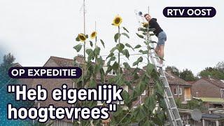 Jeroen (35) kweekt megazonnebloemen van zes meter hoog   RTV Oost