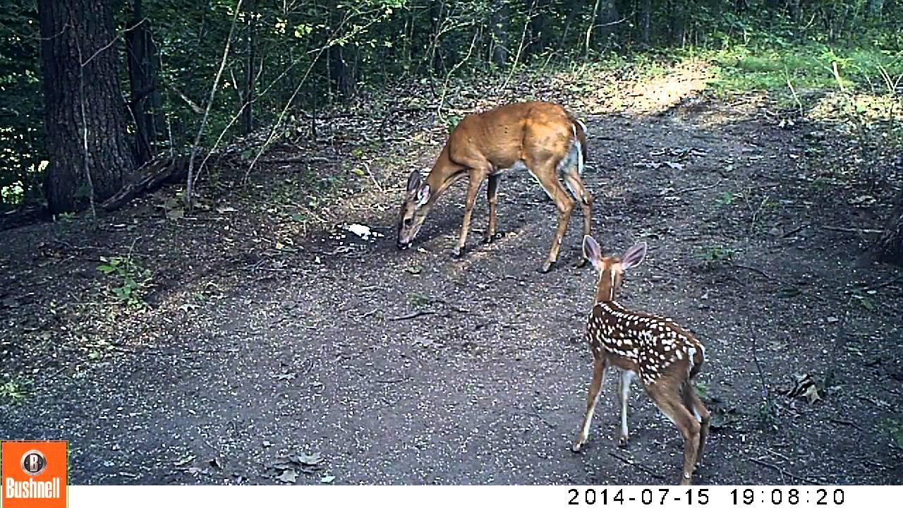 Salt licks for deer per acre — 9