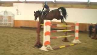 50 JUMPING HORSES FOR SALE  Call: (Gyula Szuhai) Phone: +36 70 948 7770 email: szuhaifarm@gmail.co