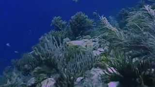 Beauty nature of ocean 3D (without any glasses)