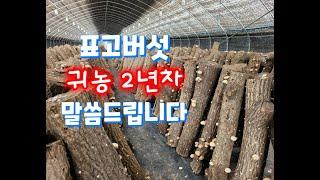 귀농2년차 표고버섯 시설재배 이렇게 하고 있습니다.