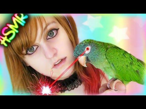 Trippy ASMR 🐦 Talking Parrot ░  ♡ Bird, Conure, Blue Crown Conure, Negative, Jacques, Laser ♡