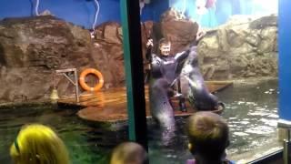 Шоу с тюленями в Океанариуме Санкт-Петербурга