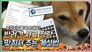 (개스맨) 강아지 사료양 계산법! 보호자님은 꼭 보세요…