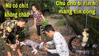 Bà Cụ 90 Tuổi Gào Thét Kêu Cứu Chú Chó Con Bị Rắn Hổ Mang Cắn Suýt Mất M.ạng| King Cobra | SBATVC