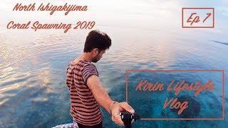 【KIRIN Lifestyle Vlog】Ep7- 石垣島サンゴの産卵2019!一斉産卵撮影大成功!Coral Spawning 2019 in Ishigakijima