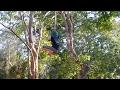 Climbing Jungle Vines