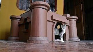 Cómo hacer una casa (Mansión) para tu gato con cajas de carton - How to make a cardboard mansion