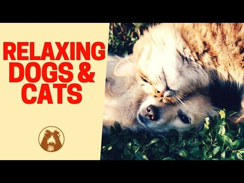 Chilling Dog 🐶 and Cat 🐱 - Relaxing Animals Video