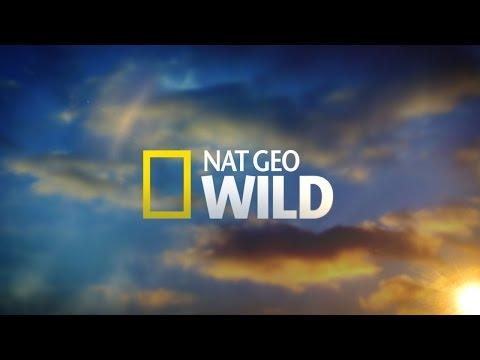 Best Documentary 2015 Nat Geo Jaguar hunting Night Stalkers [Wild Documentary]