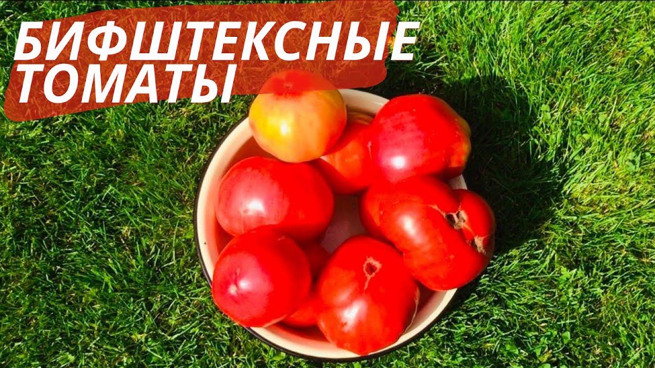 Шикарные бифштексные сорта томатов