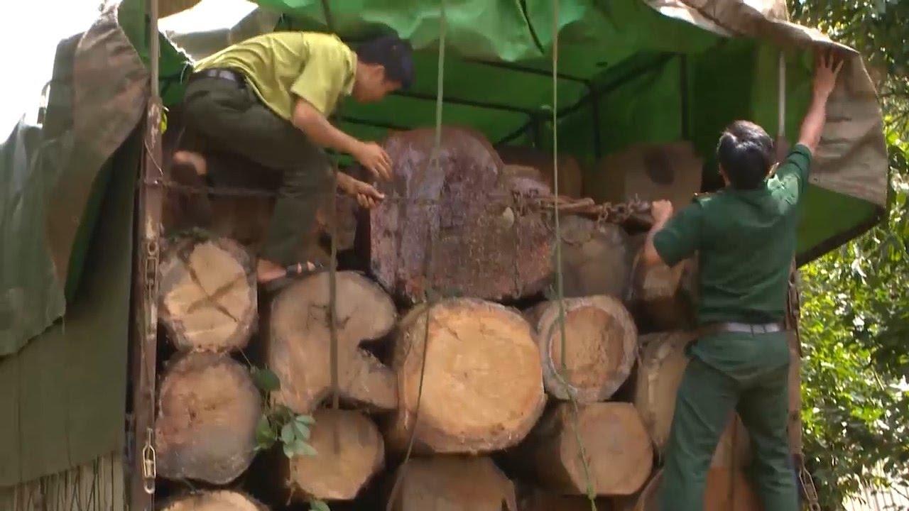 Tin tức 24h: Bắt giữ vụ vận chuyển gỗ lậu lớn trên địa bàn tỉnh Gia Lai