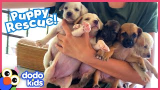 These Puppies Need A Rescuer To Save Their Mom! | Rescued! | Dodo Kids