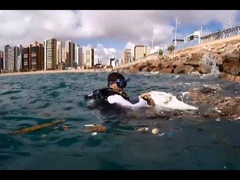 Lixo nos oceanos causa danos ao meio ambiente e a animais marinhos