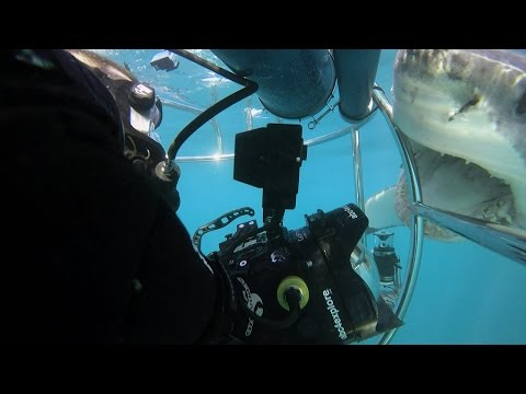Shark Alley: Two Sharks Attack Cameraman | SHARK WEEK