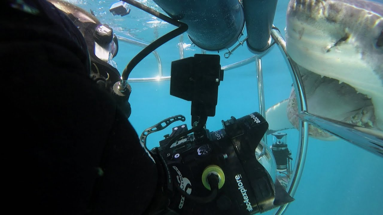 Shark Alley: Two Sharks Attack Cameraman   SHARK WEEK