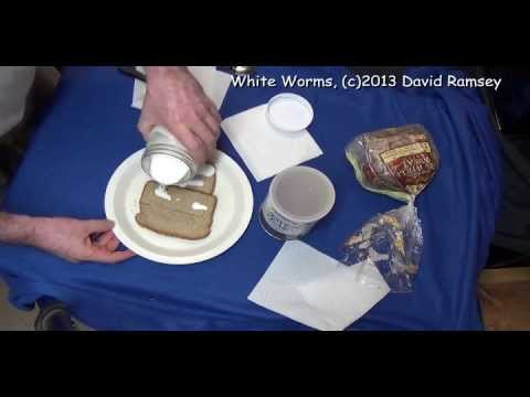 White Worms Complete Howto Start out, feeding, old cultures, new cultures