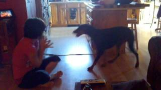 Tess wrestling with Copper