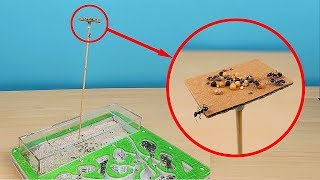 Башня Кормушка для Муравьев! Испытание Антипобега! Садовые муравьи в спячке. alex boyko