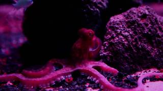 Pierre Huyghe Aquarium Project in Partnership with Okeanos Aquascaping New York City