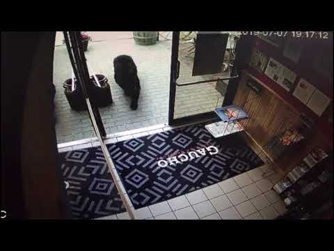 Bear Visits Brazilian BBQ Restaurant in Alberta