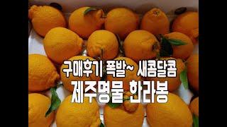 제주명물 새콤달콤 한라봉 구매후기 폭발