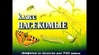 Диафильм Класс насекомые /по биологии для 8 класса/