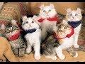 アメリカンカールの猫ちゃんが意外とかわいい♡~American curl cat is cute.