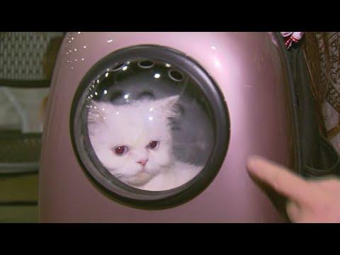 International Cat Show starts Friday