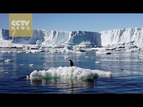 World's largest marine park created in Ross Sea in Antarctic Ocean