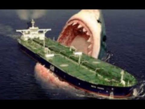 The Megalodon Shark • Big SHARK - YouTube