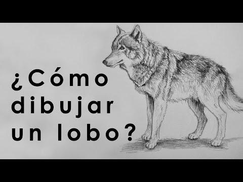 Tutorial Como Dibujar Un Lobo Con Lapiz Youtube